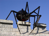 giant black spider on the wall poster