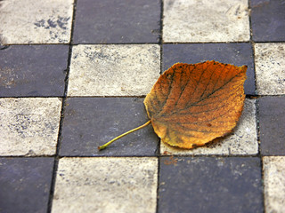 lonely dead leaf