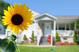 bright sunflower in front of a country house poster