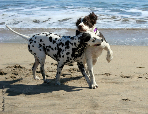 poster of 2 dogs playing on the beach