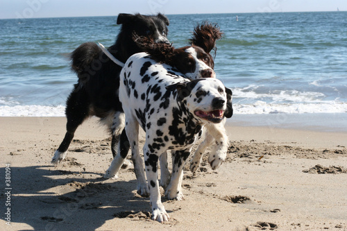 poster of 3 dogs running on the beach