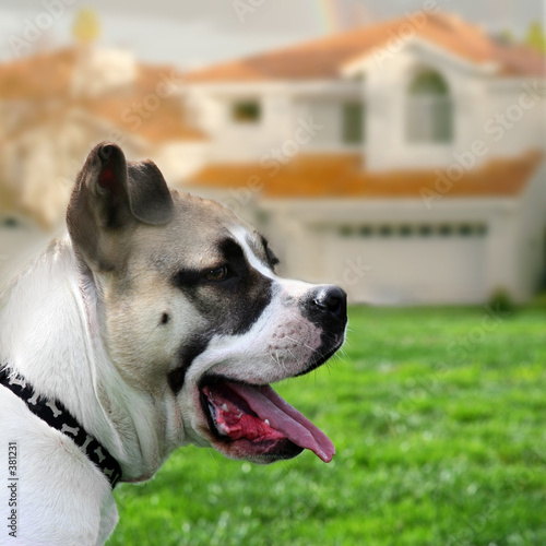 poster of dog guarding a house