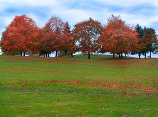 autumn trees - golf course