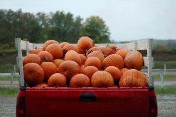 truck load of pumpkins