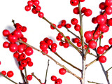 red christmas berries on white 2 poster