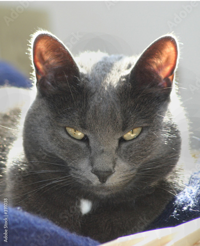 poster of gray cat