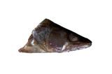 fish head poster
