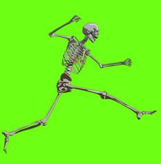 bone 178