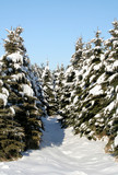 snowy evergreen path poster