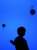 child looking at jellyfish at aquarium poster