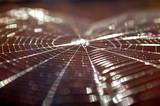 spiderweb - 399673