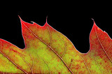 autumn leaf - 399675