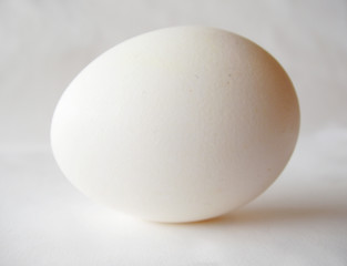 white egg on white background
