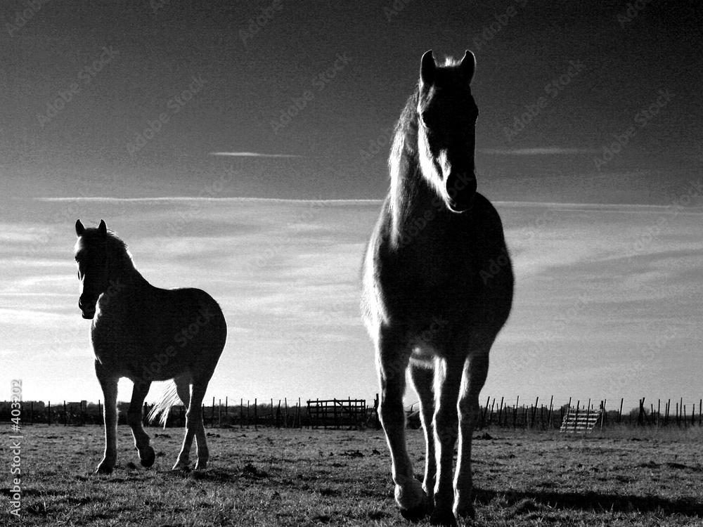 Konie na polanie - powiększenie