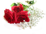 rose bouquet on white poster