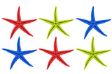 starfish in different colors against white backgro poster