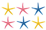 starfish in different colors poster