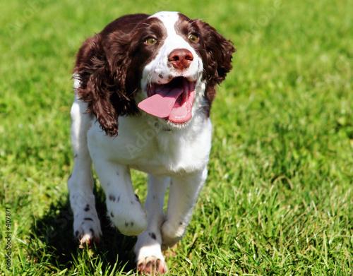 happy dog running in grass t-shirt