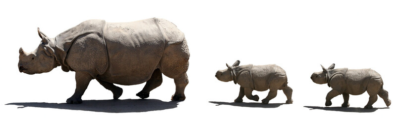 rhino family isolated