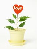 potted red heart poster