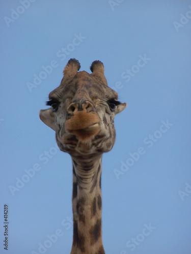 Leinwandbild Motiv portrait de girafe