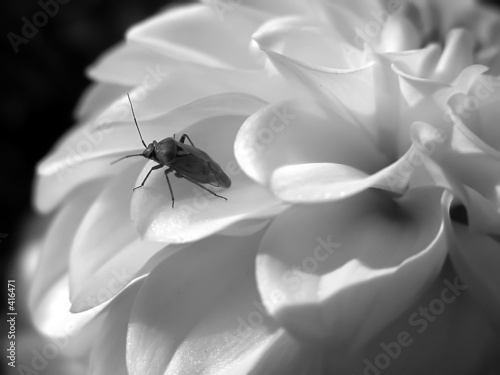 worm on the white flower