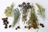 herbalism poster
