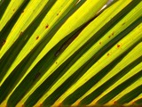 palm fronds backlit by the sun poster