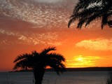 beautiful sunset with palm trees poster