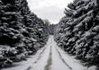 pine row path