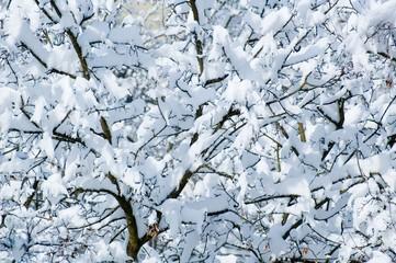 schnee auf ästen