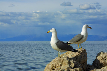 two seagulls against blue sky