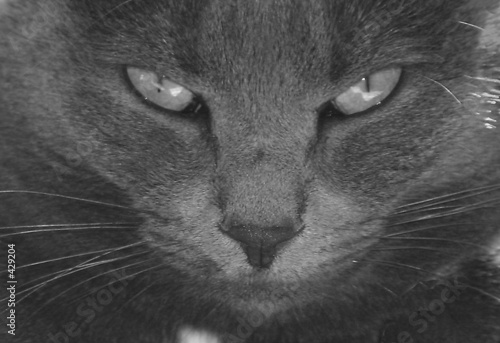 poster of monochrome cat eyes