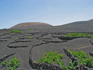 weinanbau am vulkan