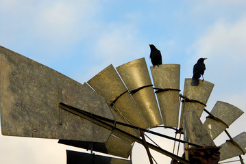 old windmill and two old crows