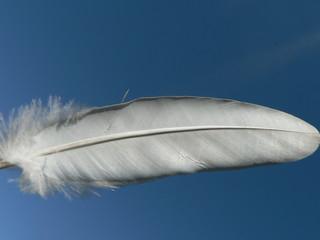 plume du ciel