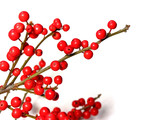 red christmas berries poster