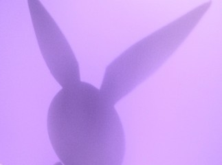 purple bunny shadow
