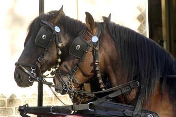 caballos-36