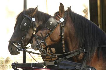 caballos-37