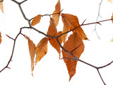 dry leaves winter poster