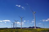 windmill field poster