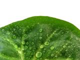 green leaf half poster