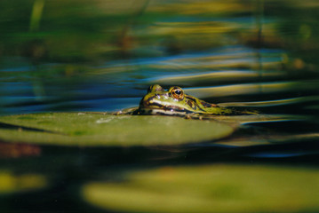 frosch - 3