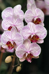 orchids beauty