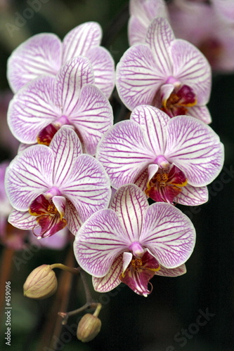 orchids beauty