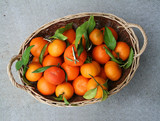 basket full of oranges poster