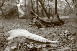 animal skull in the woods poster