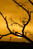silhouetted tree at sunset poster