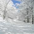 Leinwandbild Motiv traumhafte winterallee